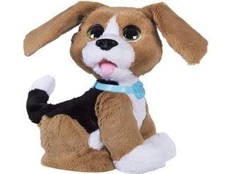 Benni der sprechende Beagle mit aufgestellten Ohren